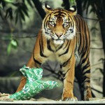 Zoo Animals Receive Christmas Treats